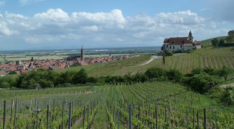 Nouveau site : Les Vignerons de Dambach-la-Ville