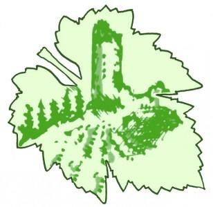 Vins d'Alsace Herrbach