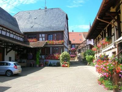 Vins d'Alsace Kirschner