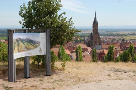 Panneau sentier viticole de Dambach-la-Ville